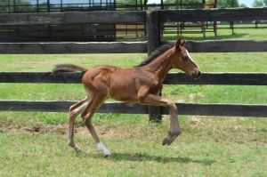 Stormy Reply's filly out for a run